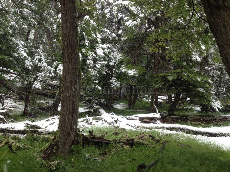 Zima i lato ono zmaga się w Patagonia, Argentyna zdjęcie royalty free