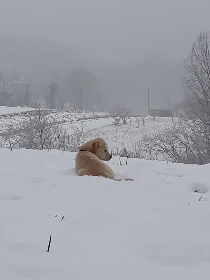 Zima i zwierzęta domowe fotografia royalty free