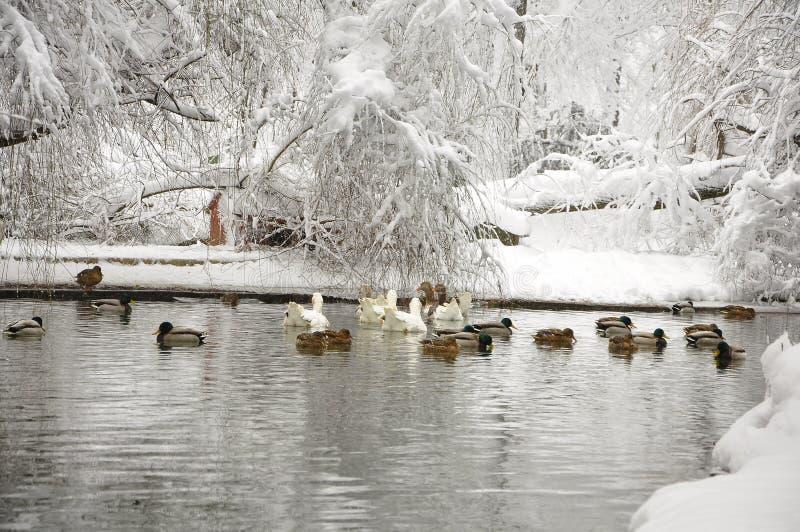 Zima jezioro fotografia royalty free