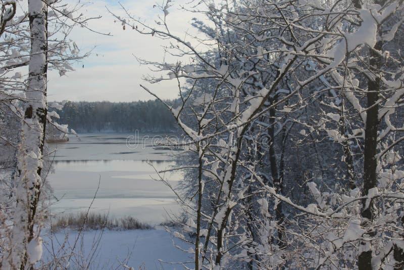 Zima, jezioro w zimie, śnieg, las w zimie, drzewa w śniegu fotografia stock