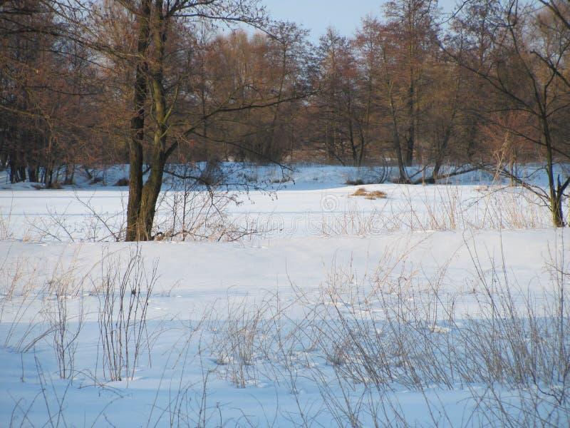 Zima kolory obrazy royalty free