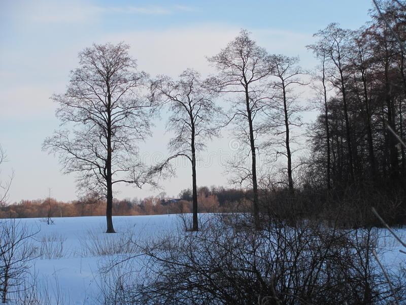Zima kolory zdjęcie royalty free