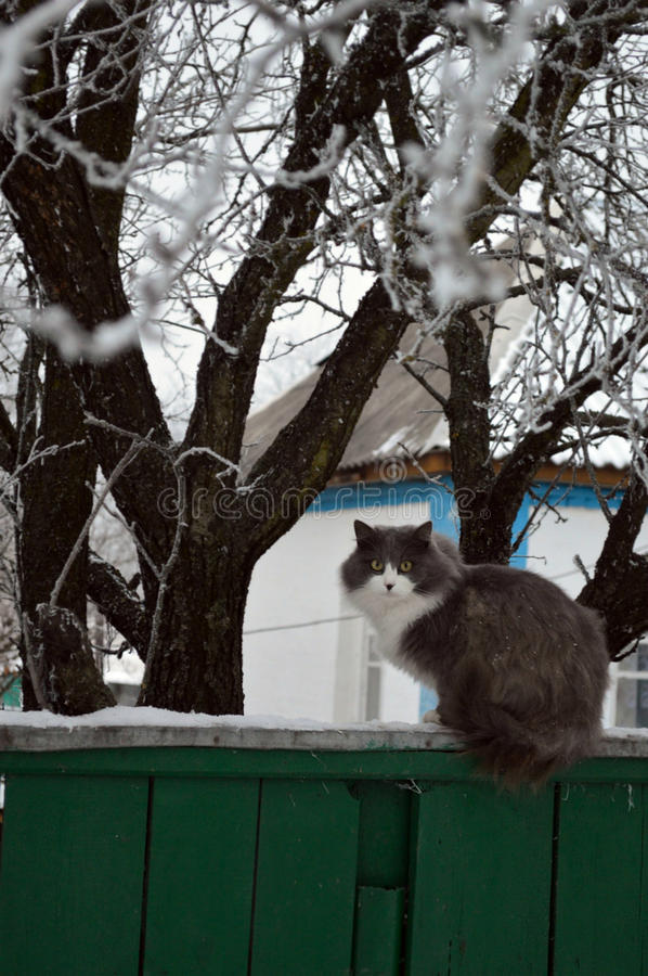 Zima kot na ogrodzeniu obraz royalty free