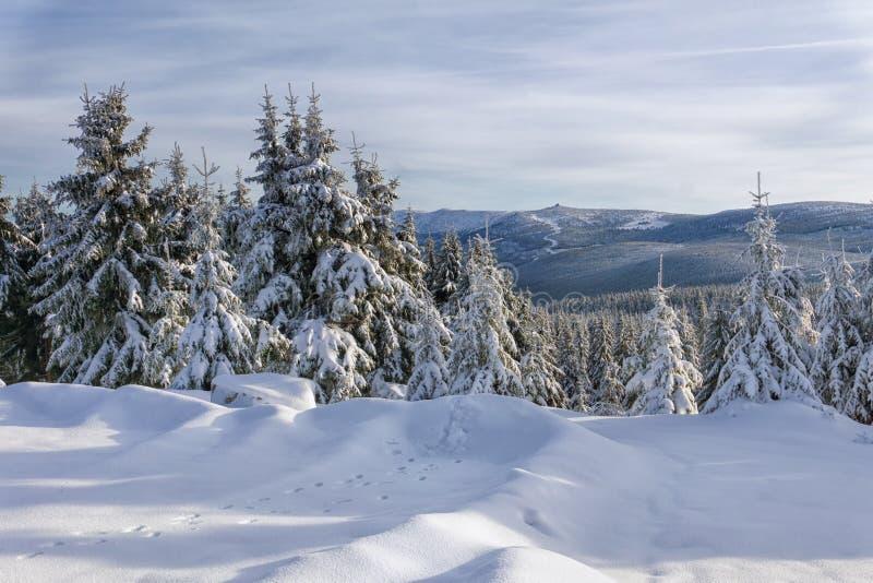 Zima krajobraz, drzewa w górach zakrywać z hoarfrost zdjęcie stock