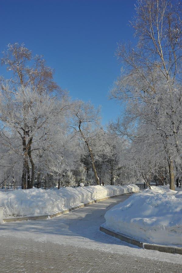 Zima krajobraz, drzewa w hoarfrost, Muraviev-Amursky regionalności park, Khabarovsk, Rosja fotografia stock