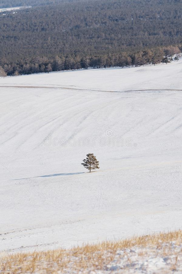 Zima krajobraz, drzewo samodzielny na białym śnieżnym polu z lasem fotografia royalty free