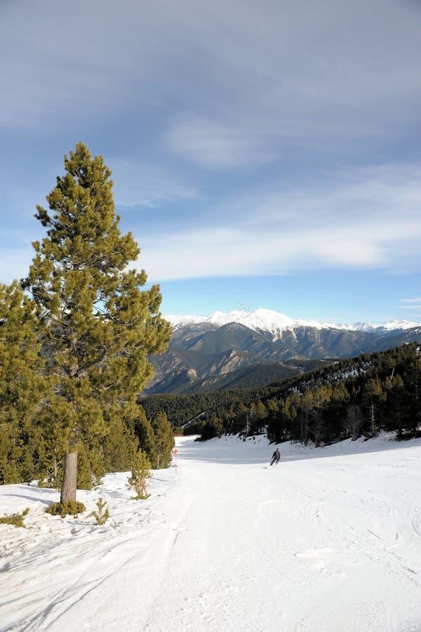 Zima krajobraz - jedlinowy drzewo w tle góry i niebieskie niebo, VallNord, ksiąstewko Andorra, wschodni Pyrenees, euro obrazy royalty free
