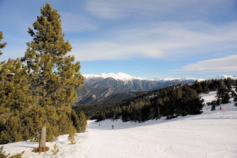 Zima krajobraz - jedlinowy drzewo w tle góry i niebieskie niebo, VallNord, ksiąstewko Andorra, wschodni Pyrenees, euro obraz royalty free