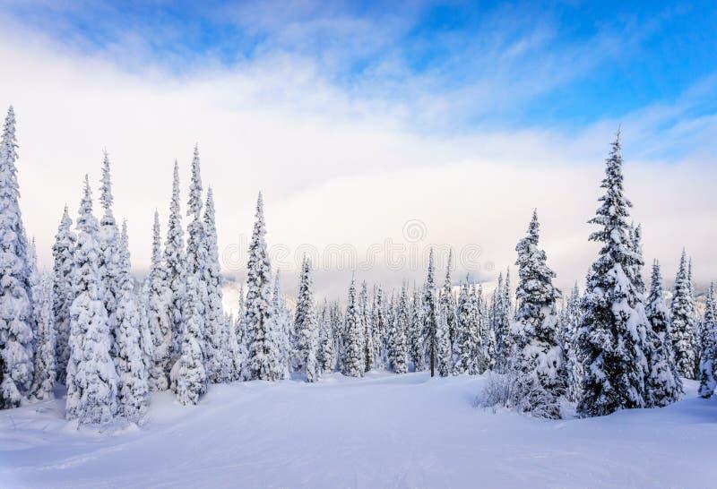 Zima krajobraz na górach z śniegiem zakrywał drzewa obraz royalty free