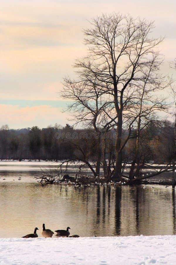 Zima krajobraz przy brzeg jeziora przy półmrokiem obraz royalty free