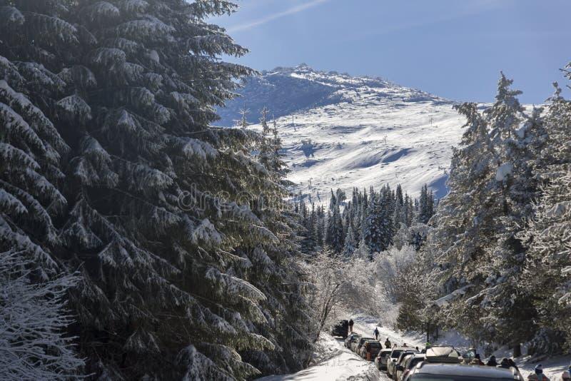 Zima krajobraz Vitosha góra z śniegiem zakrywał drzewa, Sofia miasta region, Bułgaria zdjęcie royalty free