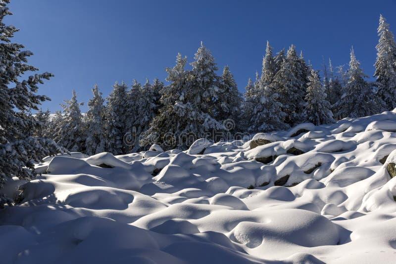 Zima krajobraz Vitosha góra z śniegiem zakrywał drzewa, Sofia miasta region, Bułgaria fotografia royalty free