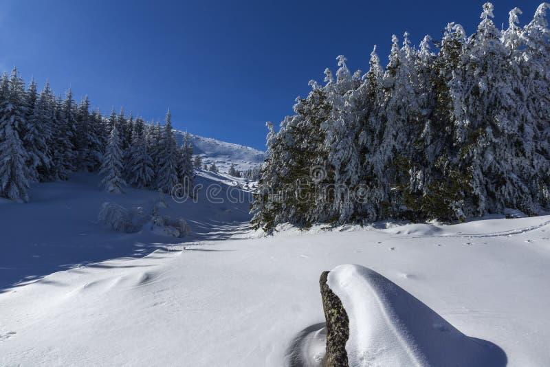Zima krajobraz Vitosha góra z śniegiem zakrywał drzewa, Sofia miasta region, Bułgaria zdjęcie stock