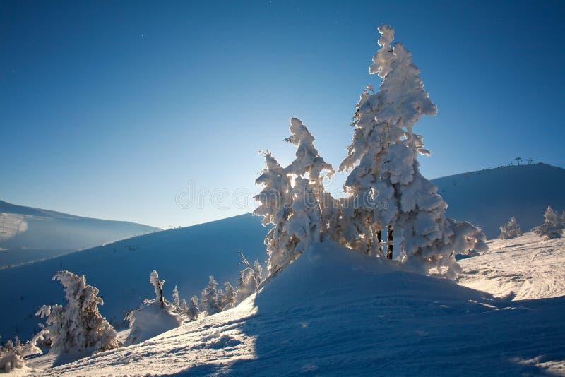 Zima krajobraz w góra jedlinowym lesie w śniegu na niebieskim niebie zdjęcia royalty free