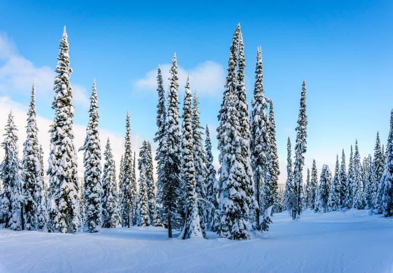 Zima krajobraz w górach pod pięknymi niebami zdjęcia royalty free