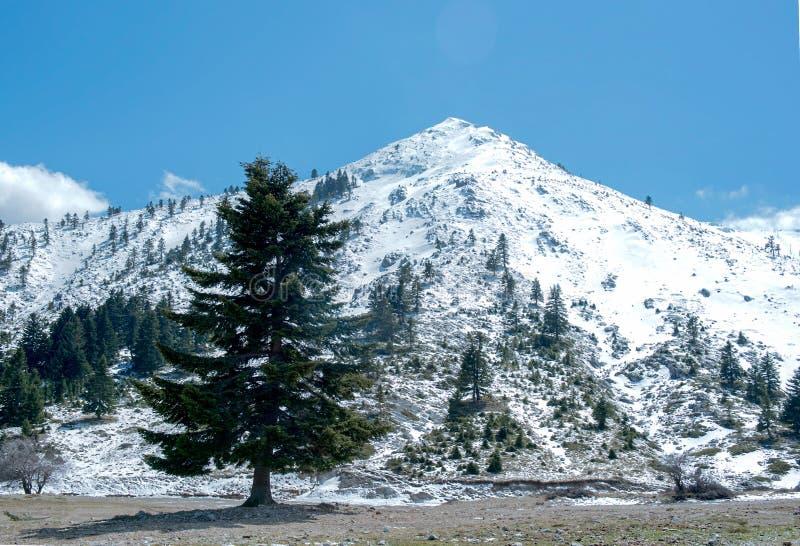Zima krajobraz w Helmos górze Grecja obrazy royalty free