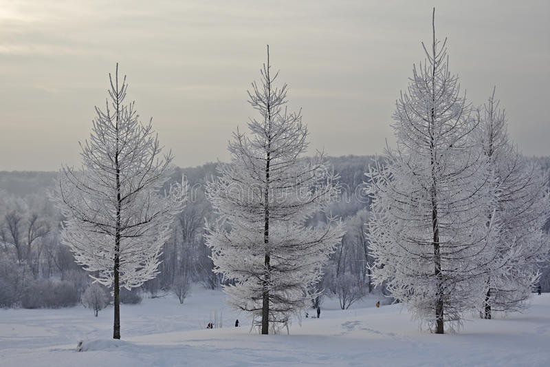 Zima krajobraz w mroźnym dniu zdjęcie stock