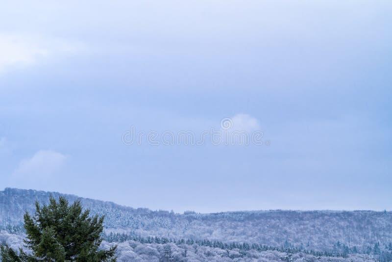 Zima krajobraz w wczesnym wieczór z kopii przestrzenią: śnieżysty las na wzgórzu obraz royalty free