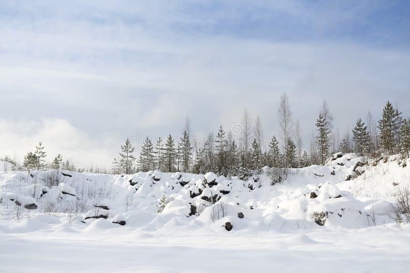 Zima krajobraz z śnieżnym i jedlinowym drzewem obrazy stock