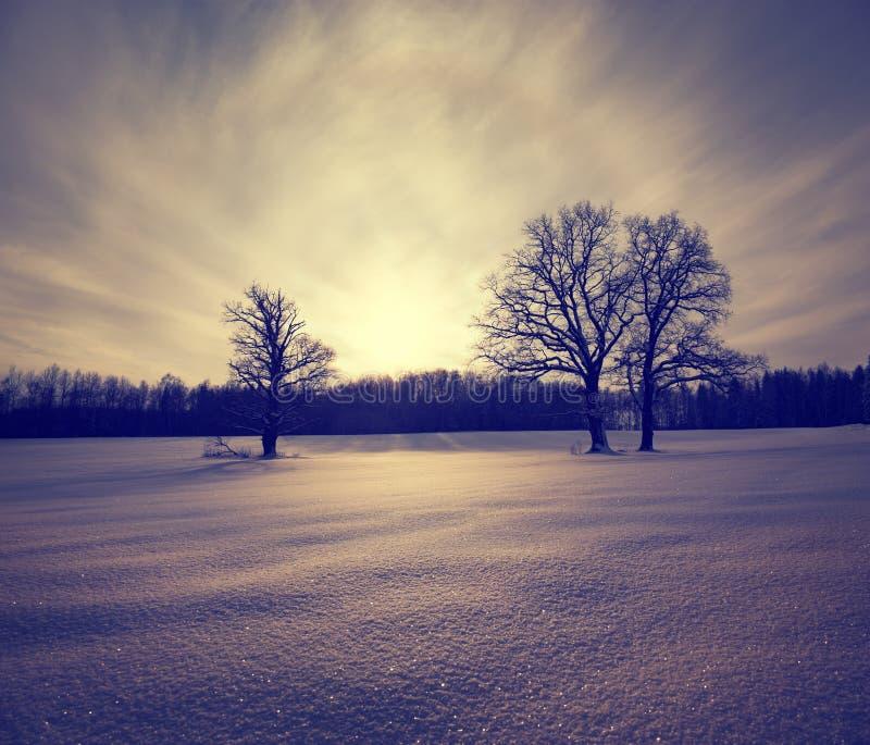 Zima krajobraz z Śnieżnym polem i drzewami obraz stock