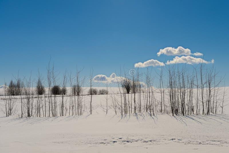 Zima krajobraz z śnieżnym polem i jasny niebieskie niebo na su obraz stock