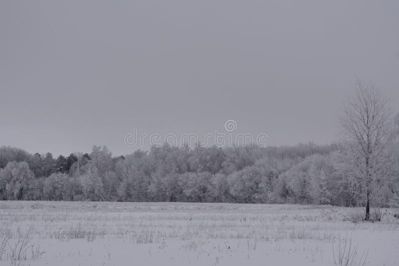 Zima krajobraz z śnieżnym polem i lasem z drzewami w hoarfrost spokoju chmurnym dniu fotografia stock