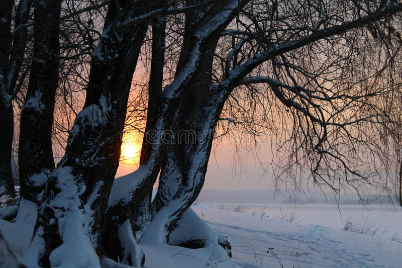 Zima krajobraz z śnieżystymi drzewami na rzece przy lub jeziorze, zmierzchem lub wschodem słońca obrazy royalty free