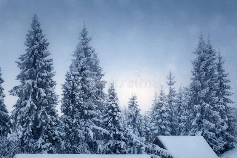 Zima krajobraz z śniegi zakrywającymi jedlinowymi drzewami obraz royalty free