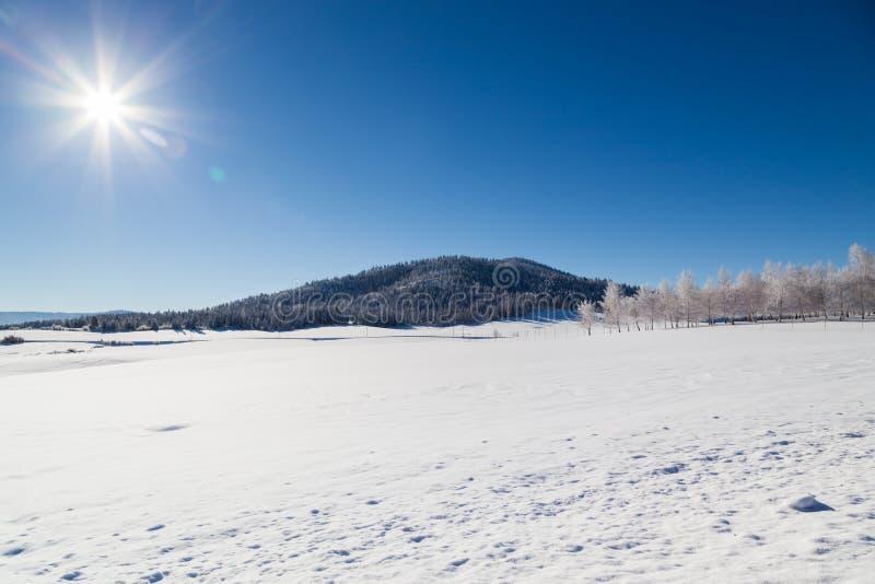 Zima krajobraz z światłem słonecznym zdjęcia royalty free