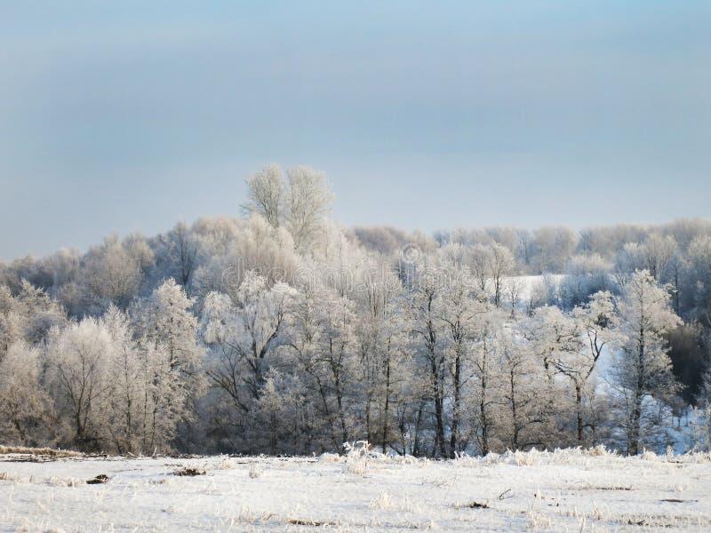 Zima krajobraz z drzewami w śniegu i niebieskim niebie zdjęcie royalty free