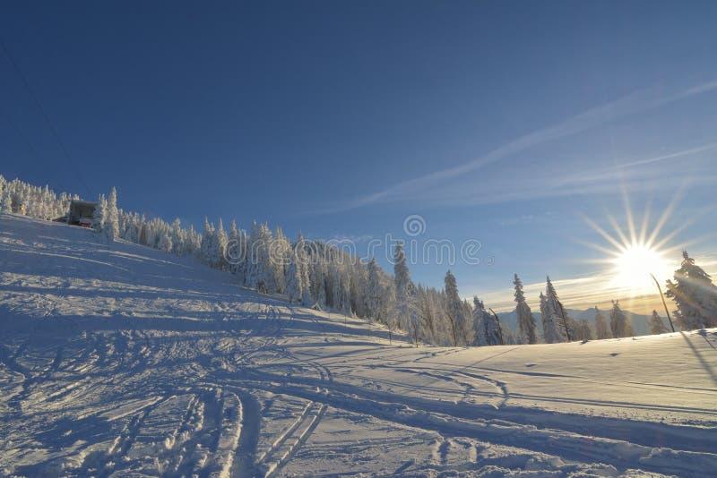 Zima krajobraz z jedlinowych drzew lasem zakrywającym ciężkim śniegiem w Postavaru górze obraz royalty free