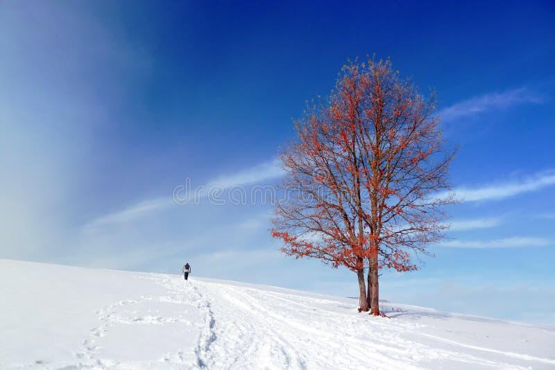 Zima krajobraz z odludnym drzewa i osoby odprowadzeniem obrazy royalty free