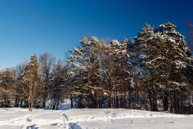 Download Zima Krajobraz Z Zakrywającymi śnieżnymi Drzewami Obraz Stock - Obraz złożonej z światło, iglasty: 28958865