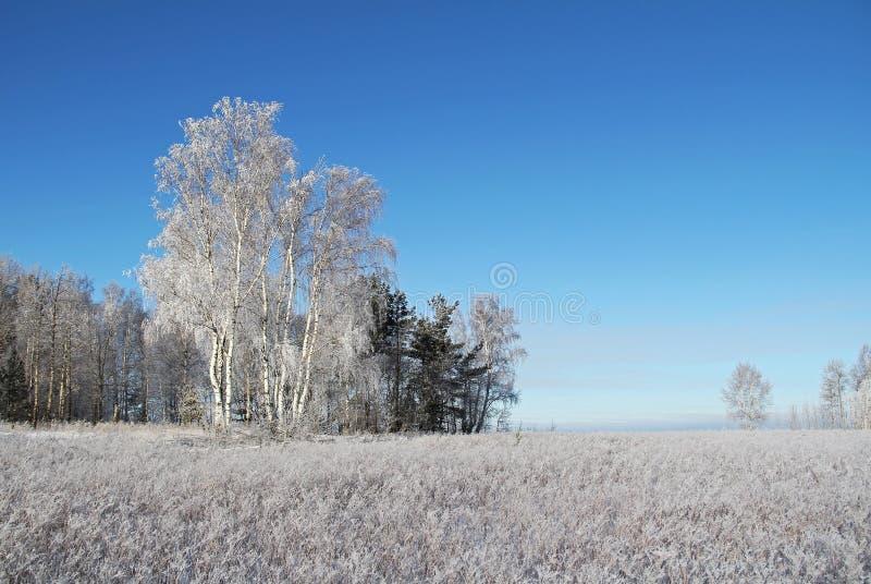 Zima krajobraz z zamarzniętymi drzewami i niebieskim niebem obrazy royalty free