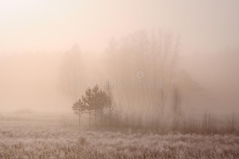 Zima krajobraz z zamarzniętymi nagimi drzewami na polu zakrywającym z zamarzniętą suchą trawą w gęstej mgle podczas wschód słońca obraz stock