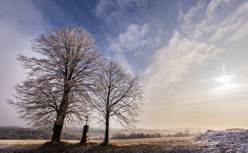 Zima krajobraz zaświecał drzewami i słońcem obrazy stock