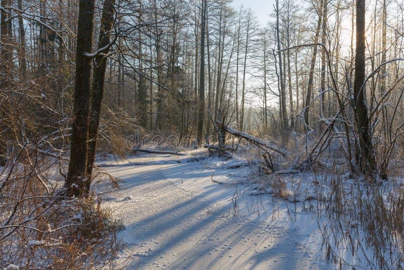 Zima krajobraz zamarznięta Lesna rzeka przy słonecznym dniem zdjęcia stock