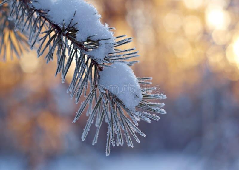 Zima krajobraz. Zimy scena zdjęcia royalty free