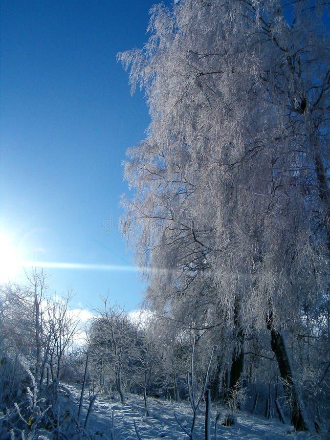 Download Zima krajobrazowa zdjęcie stock. Obraz złożonej z marznięcie - 44050