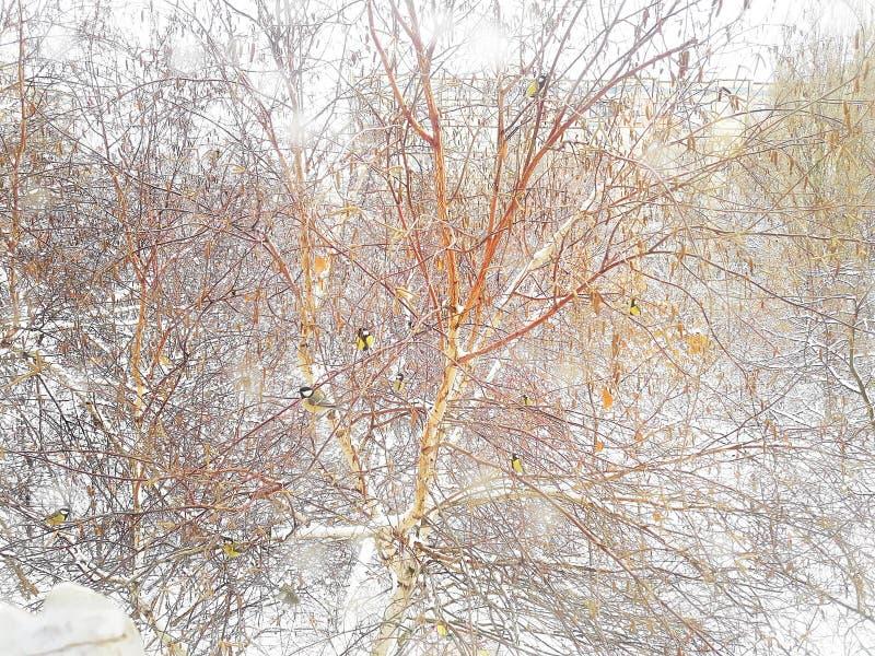 Zima krajobrazowa na zewnątrz okno Mali titmouses na drzewie obrazy stock