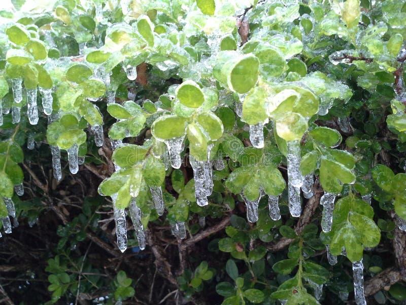 Zima lód zdjęcia stock