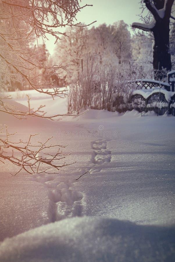 Download Zima ślad zdjęcie stock. Obraz złożonej z ślad, sceneria - 57658418