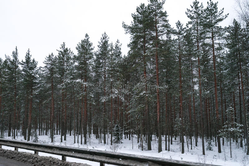 Zima las blisko drogi pełno śnieg obraz royalty free