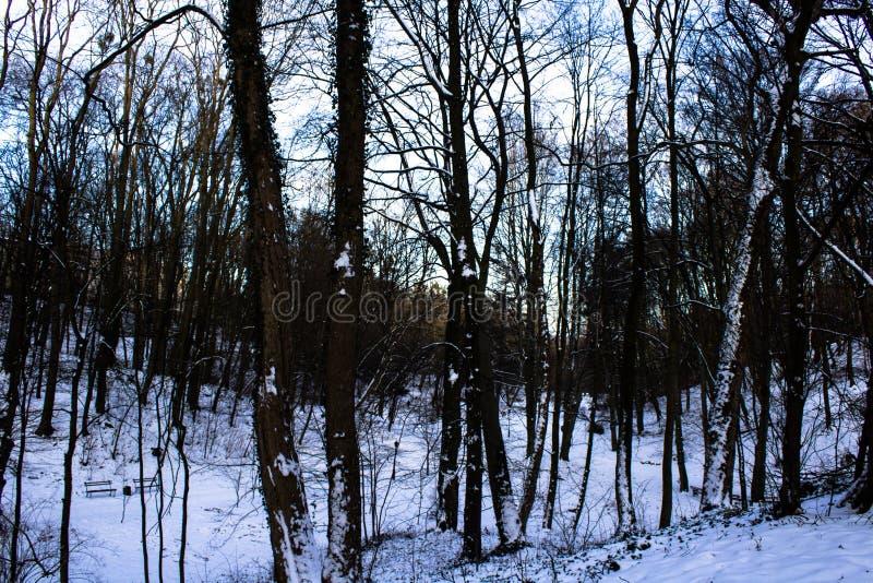 Zima las, drzewa, śnieg obrazy stock