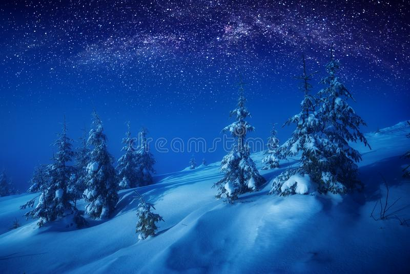 Zima las przy nocą zdjęcie royalty free