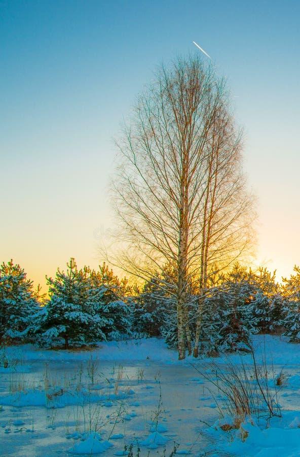 Zima las przy zmierzchem obraz royalty free