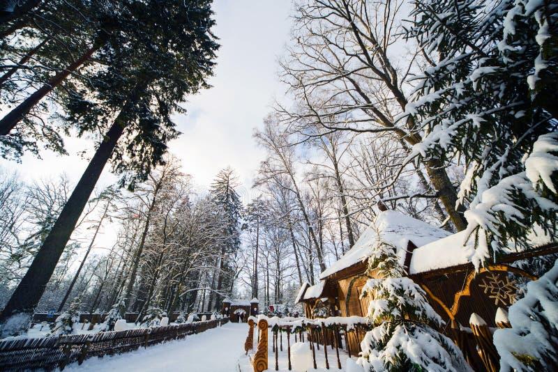 Zima las w śniegu zdjęcia royalty free