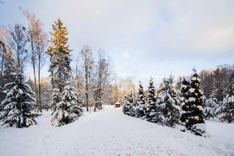 Zima las w śniegu fotografia royalty free