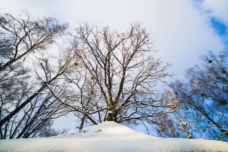 Zima las w śniegu obraz stock