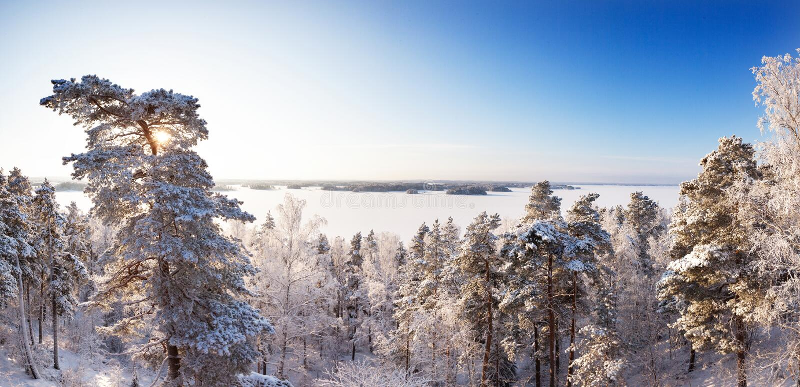 Zima las w świetle słonecznym z jeziorem i niebieskim niebie w bakcground zdjęcie stock